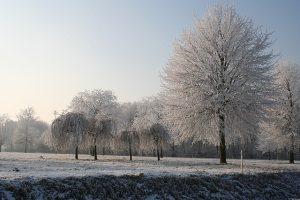Winter Golf Fitness Conditioning
